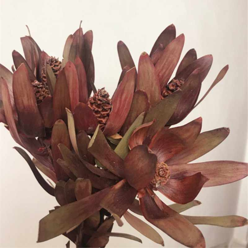 Wholesale South African Lily Dry Flowers With 5 Flowers For