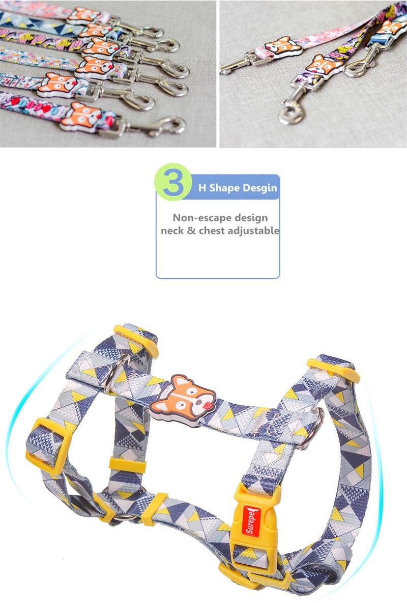 Dog Collars  (19)