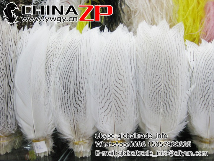 "25 CUT Hen Pheasant Centre Tail Feathers 5/"" 9/"" Fly Tying Materials"
