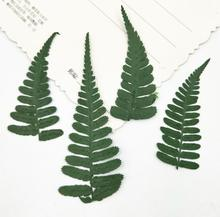 120pcs Pressed Dried Flower Woodsia ilvensis Leaves Filler For Epoxy Resin Jewelry Making Postcard Frame Phone Case Craft DIY
