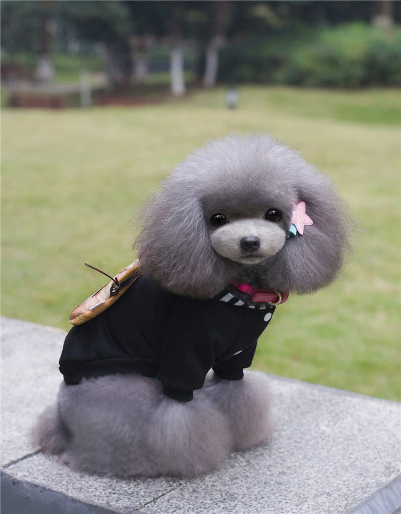 A35 kutya őszi téli pamut és bársony pulóverek - táska design - Pet termékek - Fénykép 2