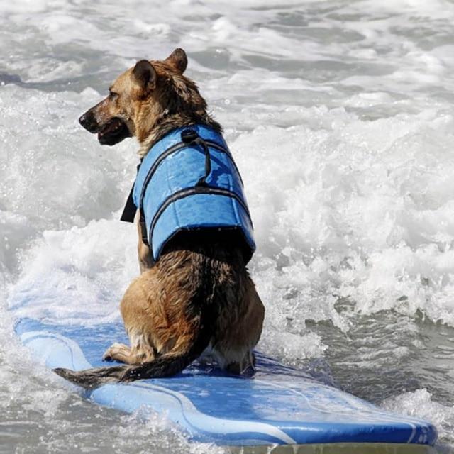Dog Life Vest Summer Pet Dog Life Jacket Safety Summer Dog Clothes Cute Mermaid Shark Dog Costume S/M/L 1