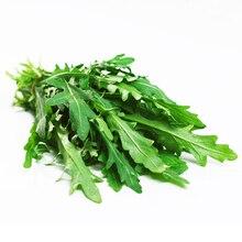 5 Pack 500 Seed Rocket Salad Seeds Eruca Sativa Rucola Arugula Vegetable Garden Seeds Hot D021
