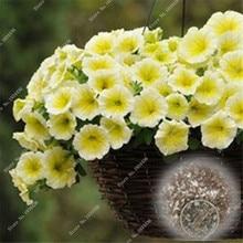 500 шт. Петуния многолетнее арахис Цветы Сад De Flores Jardinagem Em Casa Morning Glory цветочных растений для продажи