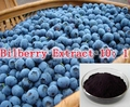 3Pack High Quality Bilberry Extract 10: 1 Extract 500mg x 300caps rich of Anthocyanidin free shipping