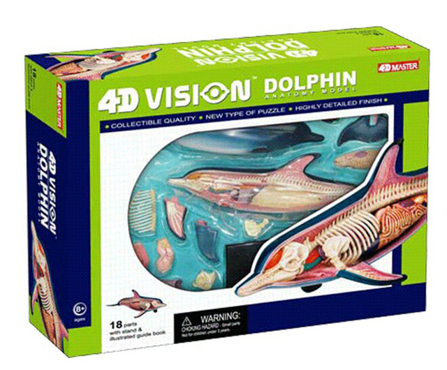 New 4d Dolphins Anatomy Assembled Models Three Dimensional Jigsaw