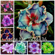 200 Pcs Mixed China Cheap Hybrid Daylily Flowers Hemerocallis Lily Outdoor Plant Home Garden Supplies Day Flower Ornamental