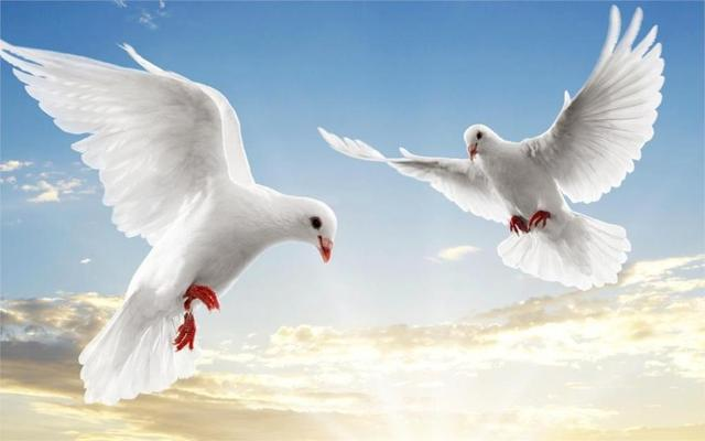 Animale Colombe Bianche Soar Sky 4 Dimensioni Della Parete Immagine