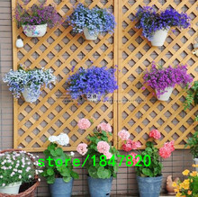 Hot Selling 20 different Hanging Petunia Seeds Blended-color Flower Seeds Plant Seeds Garden Petunia 500 pcs Free Shipping