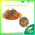 Melhor Qualidade cápsula de cordyceps sinensis extrato em pó 500 mg * 400 pcs
