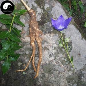 Buy Platycodon Grandiflorus Semente 200pcs Plant Bellflower For Herb Jie Geng