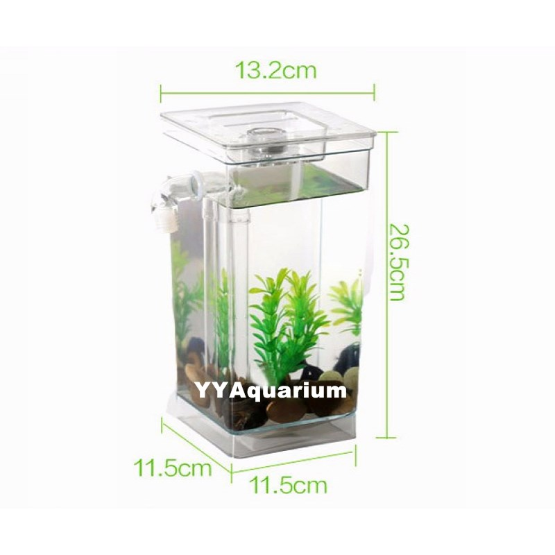 Best fish tanks for kids for Best fish for kids