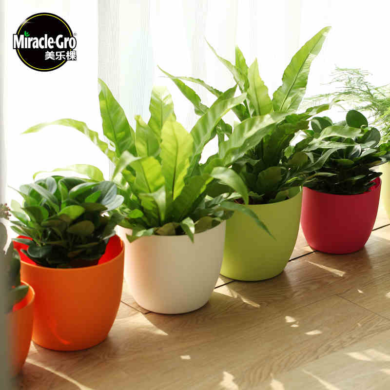 Miracle Gro Round Self Watering Pot Plastic Flower Pot