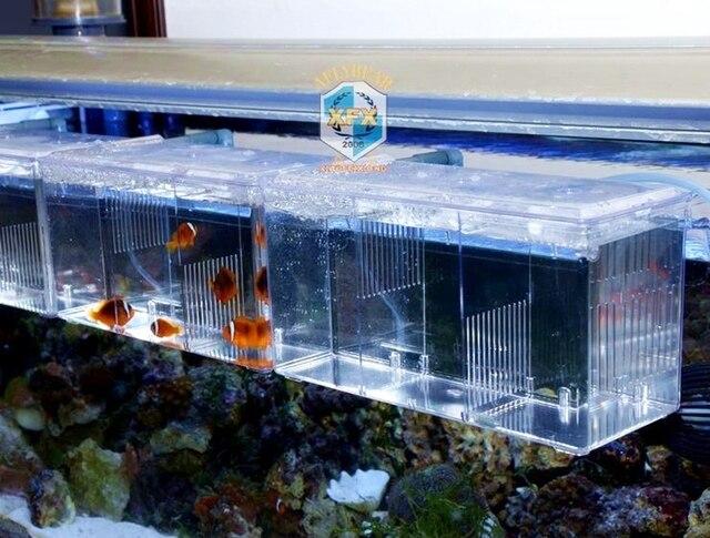 Sala Parto Guppy : Carro armato di pesci acrilico allevamento casa acquario sala parto