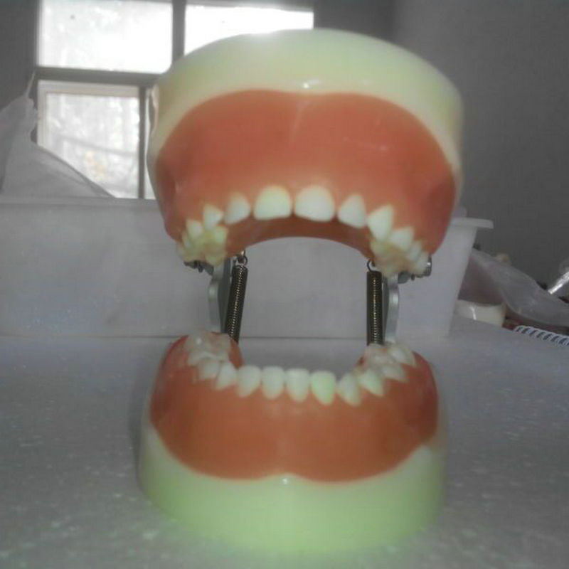 1pc dentistry and oral care Child teeth models Dental Teeth Jaw Models for dental school teaching dentist dental teeth Models karanprakash singh ramanpreet kaur bhullar and sumit kochhar forensic dentistry teeth and their secrets