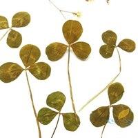 50 Pcs Natural Shamrocks Dried Branches Plant Specimens Lovely Card Decorative Handmade Materials Creative Art Craft