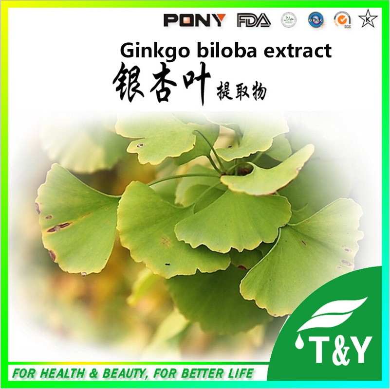 300g GMP Standard Ginkgo/ Ginkgo Biloba/ Folium ginkgo Extract with free shipping