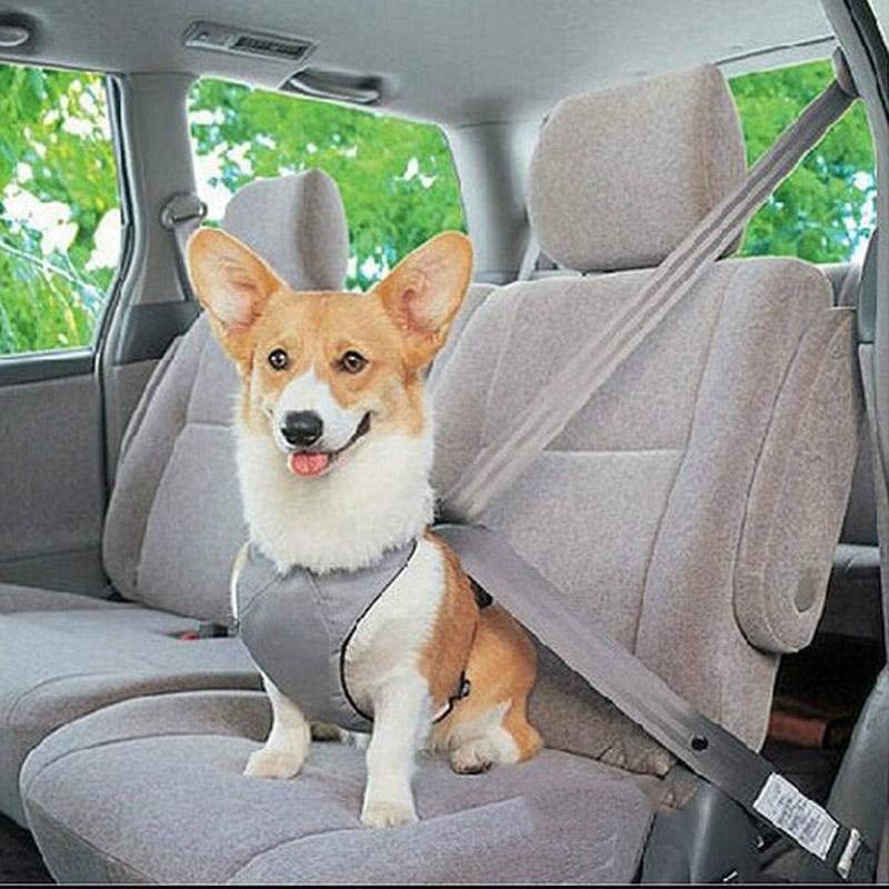 Perros mascotas Correa Collar Cinturón de seguridad de Coche Para Perro arnés de