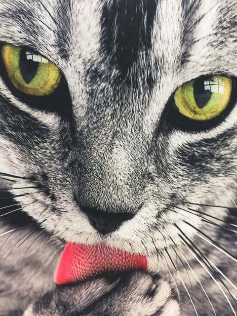 Funny 3D Cat Print T-shirt