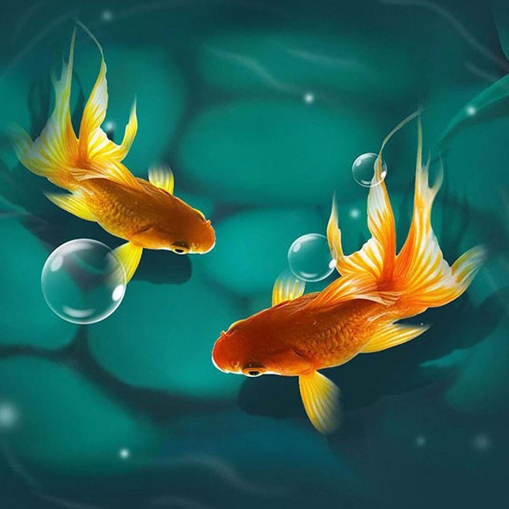 красивые картинки с рыбками золотыми рыбками выбор мест