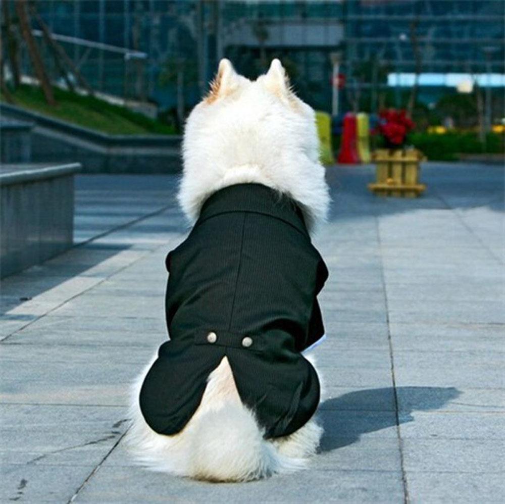 Big Dog Coats Clothing Tuxedo Striped Large Gentleman Wedding Suit ...