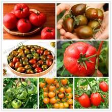 551478686a721 300 pièces bonsaï en pot saisons fruits légumes tomate maison jardin bonsaï  graines succulentes plantes rares
