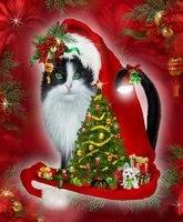 5ddiy Алмазная вышивка Рождество Cat Hat картина, вышитая бисером мозаика со стразами и круглым украшения дома ремесел
