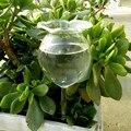 Садовый стеклянный поливочный спринклер  комнатный автоматический цветочный капельный питьевой фонтан  домашний садовый горшок  автомати...