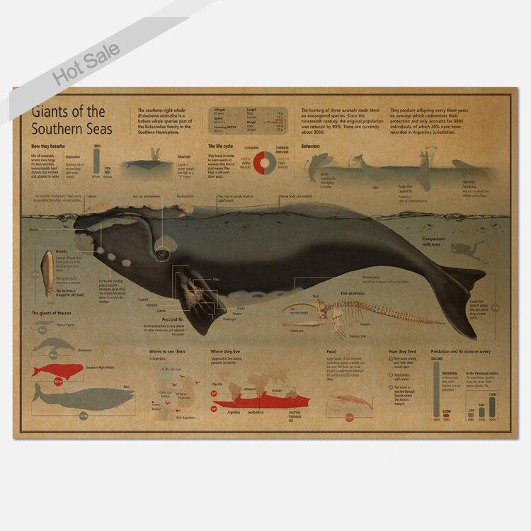 Freies Schiff Grafik Whale Wissenschaft Farbe Vintage Kraft Poster Retro Bar Cafe Wohnzimmer Wandaufkleber 42x30 Cm