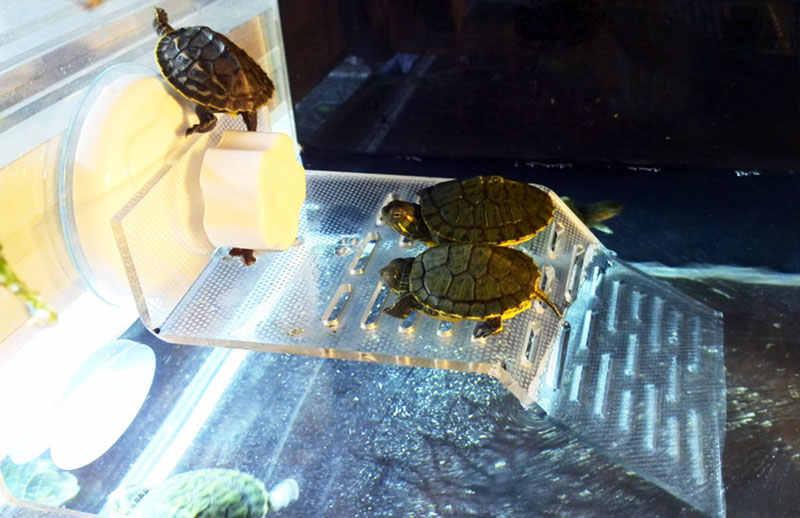 Przezroczysty Tortoise Crawler taras na dachu żółw basen pływający wyspa Dorsal wygrzać platformę dekoracja akwarium akcesoria
