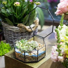 Modern Glass Octagon Tabletop Succulent Plant Terrarium Box