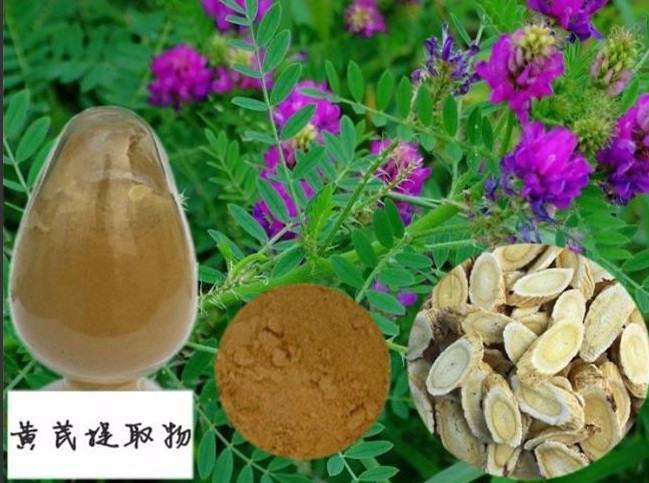 1000g free shipping 100% Nature Astragalus root extract 50% polysaccharide UV