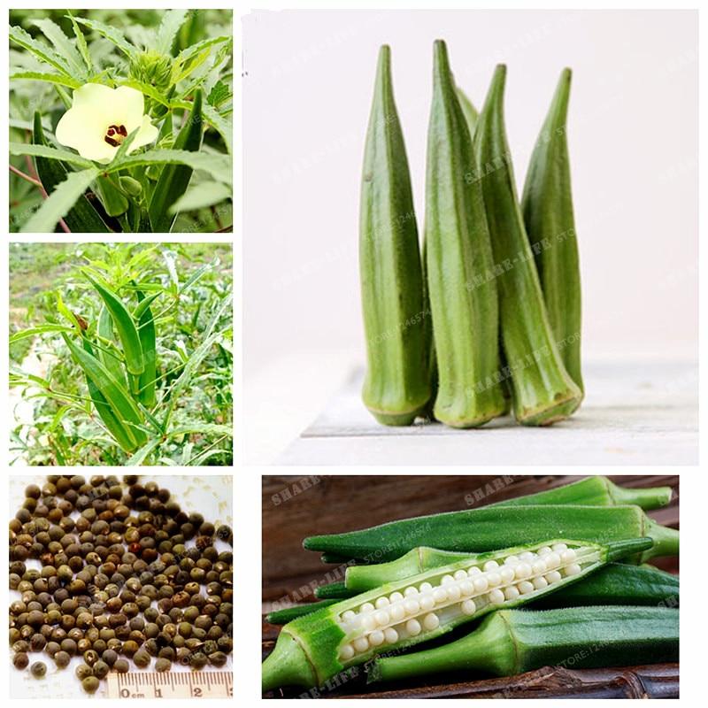 Okra Green Healthy Vegetable Delicious 20