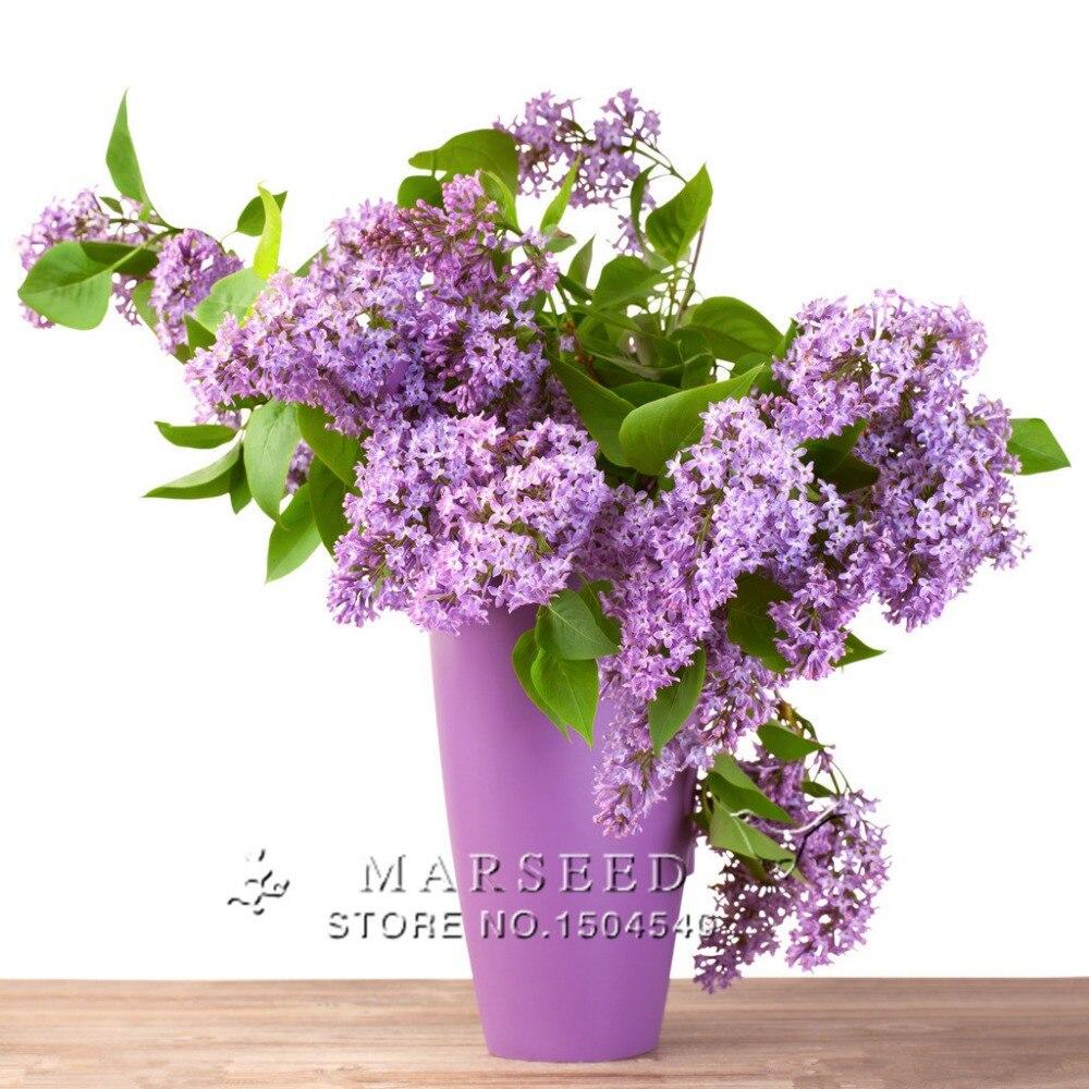 achetez en gros lilas arbuste en ligne des grossistes lilas arbuste chinois. Black Bedroom Furniture Sets. Home Design Ideas