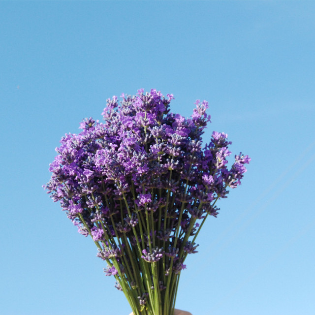 Xinjiang ili 65 lavender flowers bouquets of dry decorative flower ...