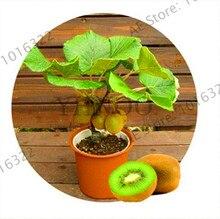 Big Promotion!GGG AAA 40pc/lot Free shipping, Thailand Mini Kiwi seeds Fruit Bonsai Plants, Delicious Kiwi Small Fruit Trees See