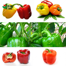 Bell Pepper mix Colour Non GMO Organic edible vegetable for Home Garden Bonsai plants 100pcs/bag