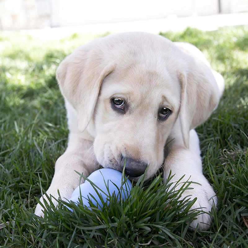 XS-L KONG Cucciolo di Cane Giocattolo con La Vostra Scelta di Cane Trattare