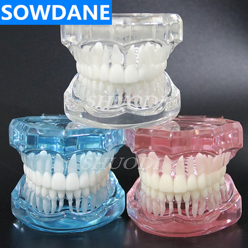 1 Piece Dental Standard Tooth Model Orthodontic Model For Patient Communication Dental Study Clinic