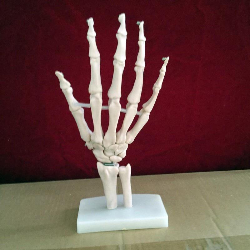 Tamaño Natural humano conjunta mano esqueleto anatómico modelo ...