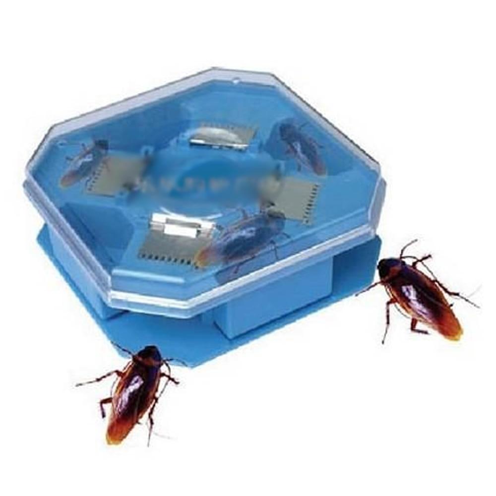 Cockroach Control: Cheap Cockroach Control