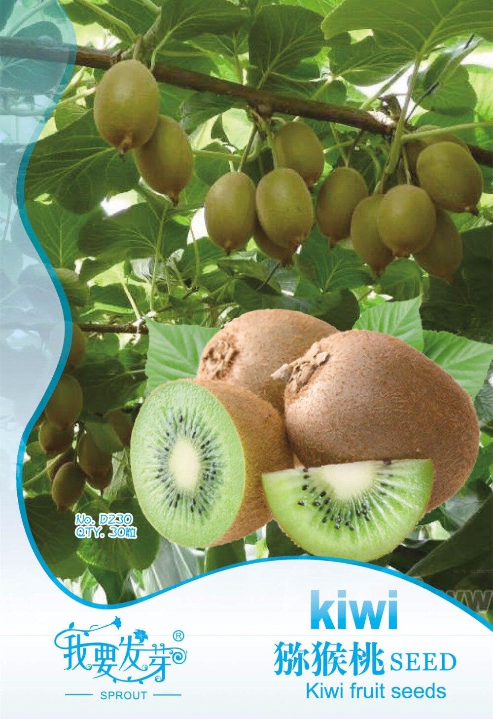 d'origine pack graines de kiwi actinidia arguta arbre nutritifs