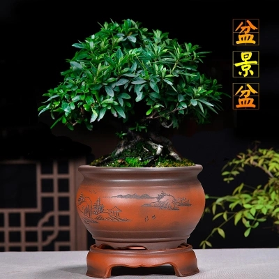 Yixing Purple Sand Flower Pots Fine Orchid Flower Pot Indoor Desktop ZiSha Pot Gentleman Orchid Bamboo Ceramic Pots