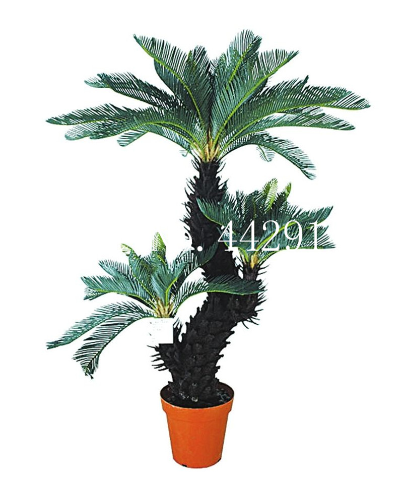 10 Pcsbag Blue Cycas Bonsai Sago Palm Tree Budding Rate 97
