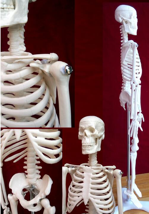 New 45cm human skeleton model teaching aid Mini - Skeleton mannequins Learning Resources Can be active teaching medical C004