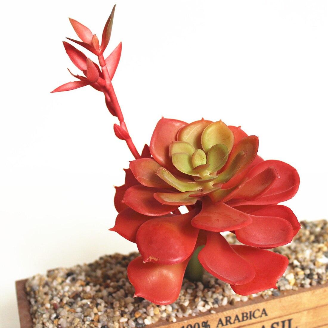 festival Supplies Micro Multi Color Flowers Ornaments Lithops ...