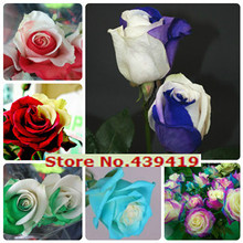 200 Particles 24 kinds Rare Rose Seeds Perennial Rainbow Rose tree seeds for flowers potted plant bonsai or garden