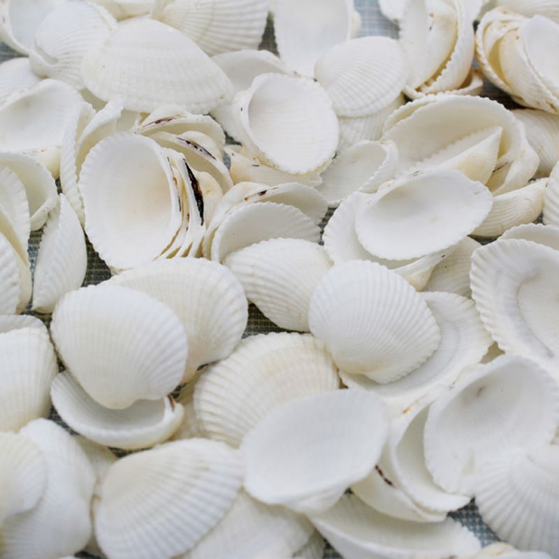 50pc Fashion Aquarium Landscape Seashells Jewelry Craft Decor Natural Conch Shells Conch Corn Screw Wall Decoration