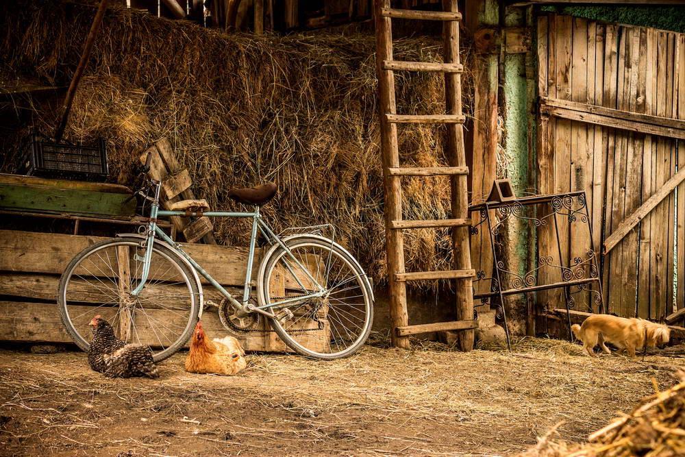 old Farm Cottage barn Straw Hay Yard Hens Dog Bicycle Ladder Wood Doo backdrop Vinyl cloth Computer printed wall Background