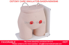 FISTULA OSTOMY NURSING ,NURSING CARE SIMULATOR, NURSING TRAINING MODEL,OSTOMY CARE SIMULATOR,OSTOMY CARE SIMULATOR-GASEN-NSM0046